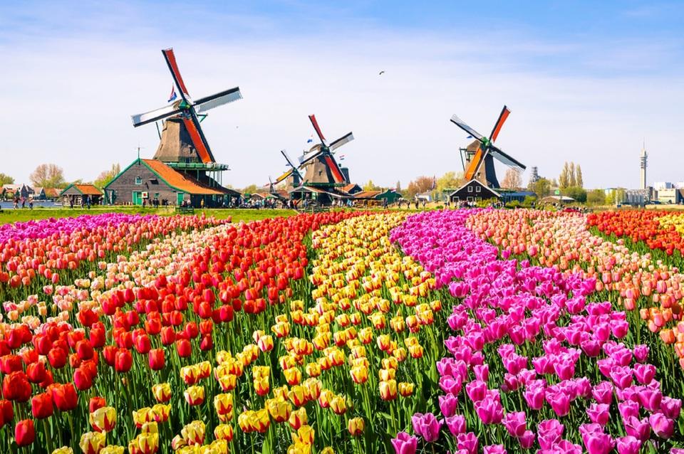 Zaandam, Netherlands_474434224