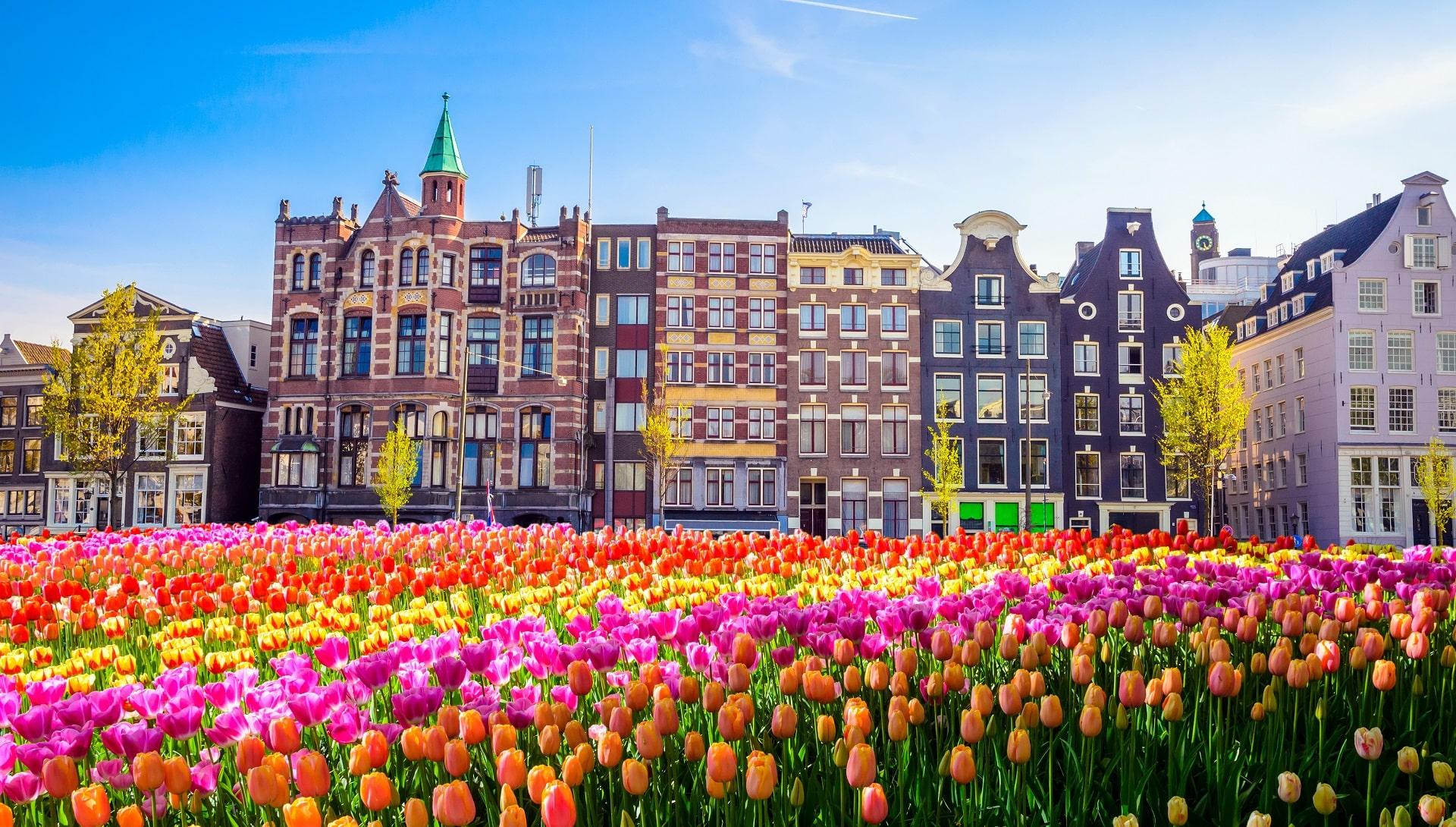 Amsterdam-Tulips