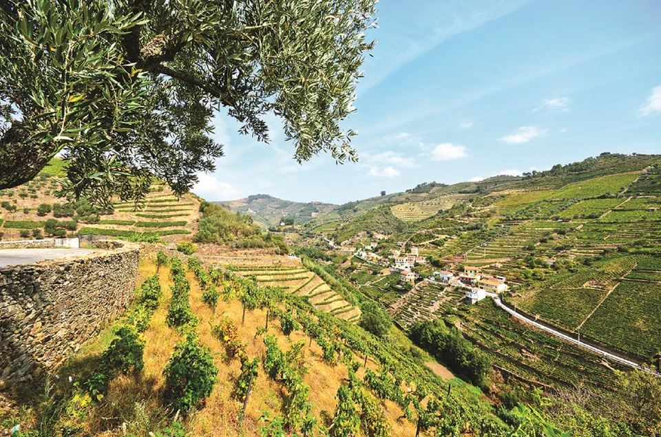 Vineyard in Peso Da Regua, Portugal _278016800