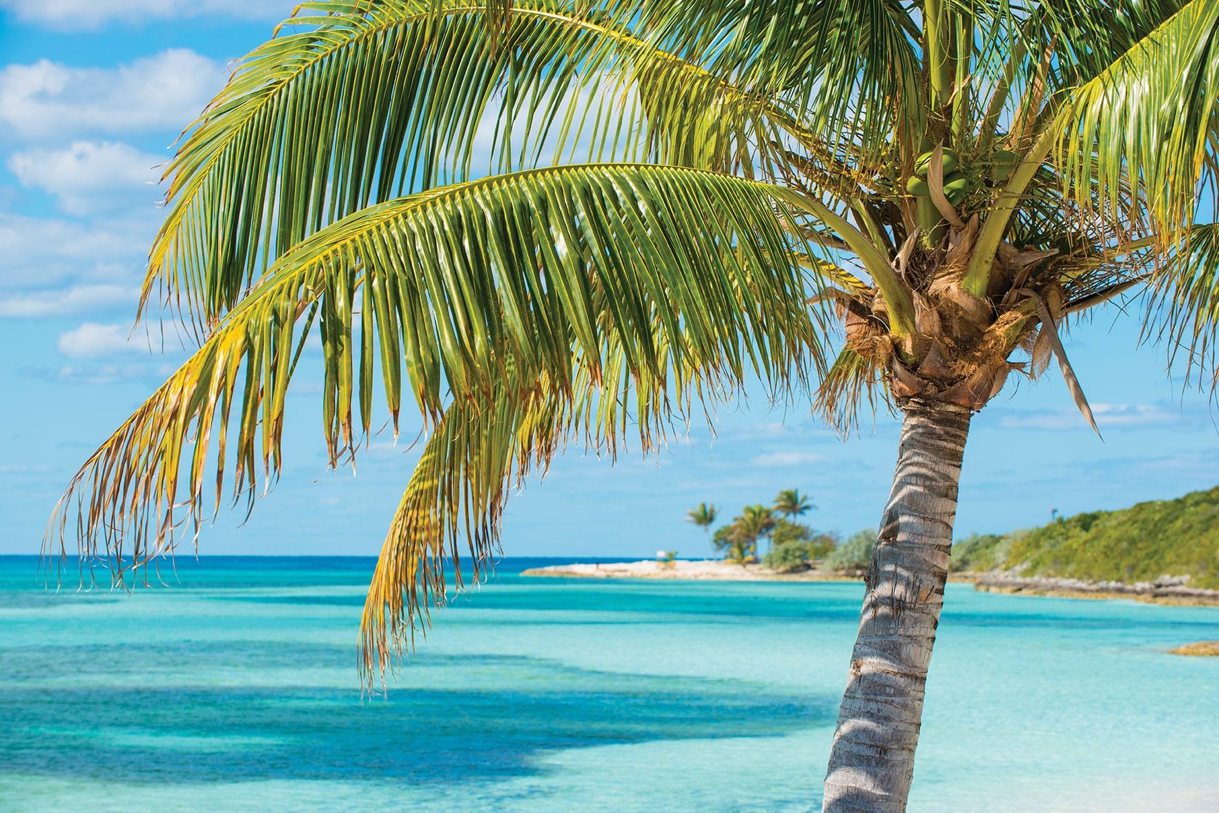 Bahamas-Coco-Cay-Palm-Tree